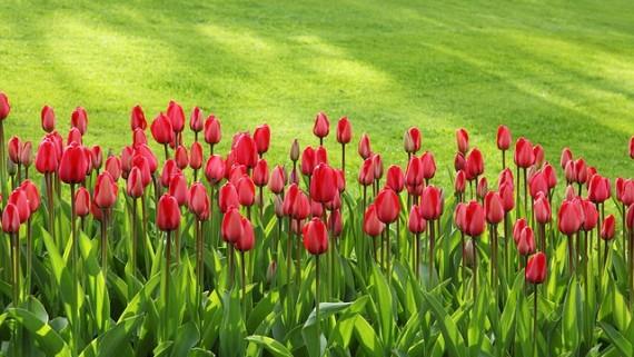 Tres Punto Uno - Mantenimiento Integral de Jardines