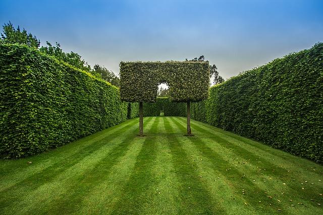 Tres Punto Uno - podas jardines arboles plantas madrid