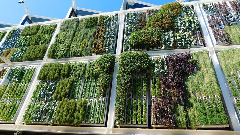mantenimiento-jardin-vertical
