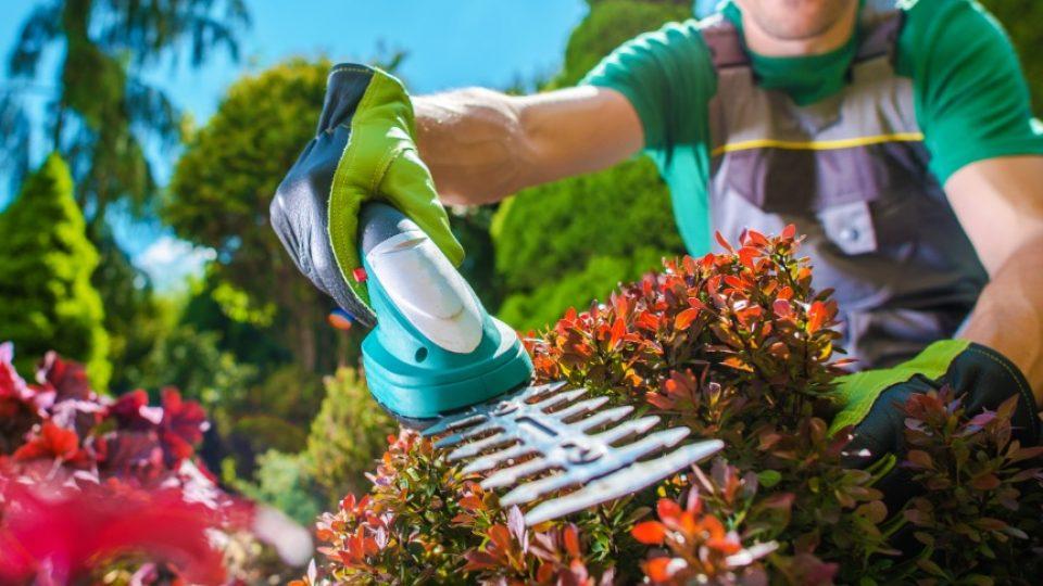 Jardineria para empresas corte y perfilado de setos