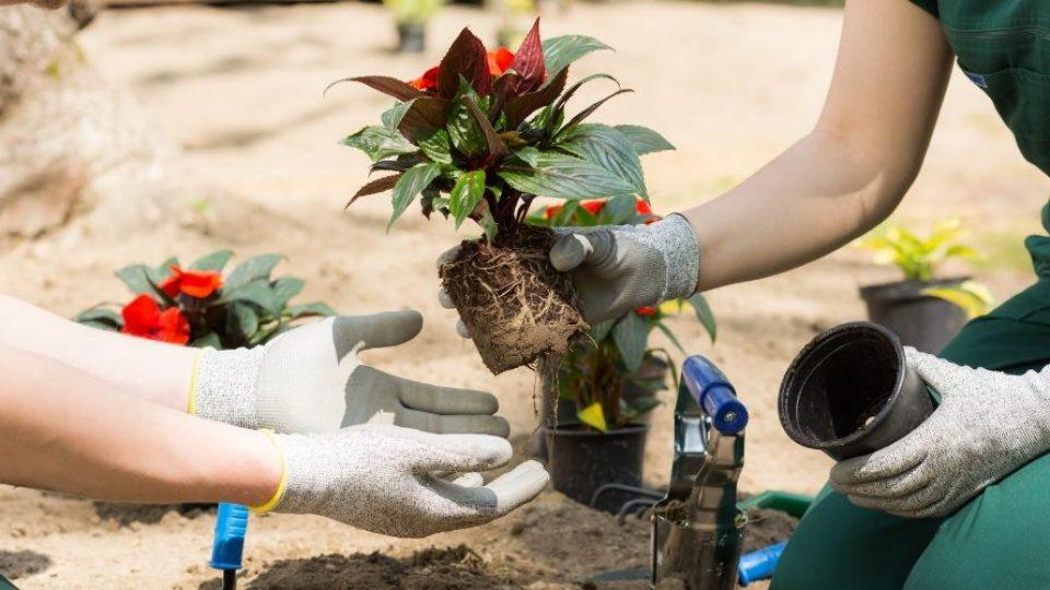 servicio de jardinería en Alcalá de Henares